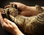 Adoção de felinos: o que saber antes de ter um gato