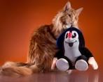 Tudo sobre o mundo dos bichanos: como exercitar seu gato