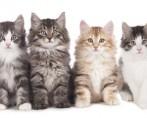 Venda de gatos: conselhos para escolher seu bichano!