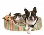 Veja quais são os melhores pets para apartamento
