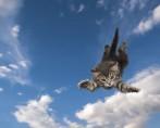 Verdadeiro ou falso? Descubra os 7 maiores mitos sobre gatos