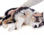 Como abrir uma clínica veterinária