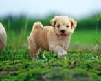 Cachorrinho ideal – Saiba como escolher o seu novo pet canino
