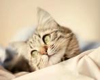 Cama para Gatos - Dicas Importantes