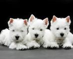 Projeto de lei que proíbe testes em animais é aprovado na Câmara