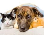 Ressonância magnética em cães e gatos