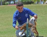 CTA - Centro de Treinamento de Animais