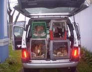 PETTAXI Transportes de Animais Domésticos