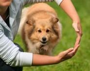 Adestramento de Cães Salvador - PCS