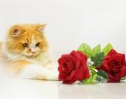 Serviços Funerários para Pets