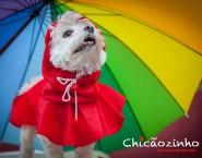 Chicãozinho - Pet Conveniências