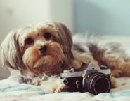 Oh My Pet!