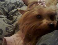 Lillu's Pet