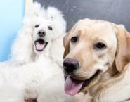 Mundial Centro Estético Canino
