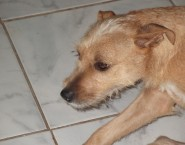 Instinto Canino