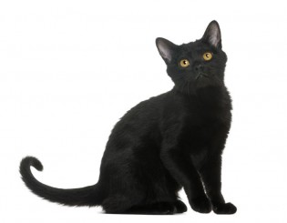 Clipart Egyptian Sitting Cat Back