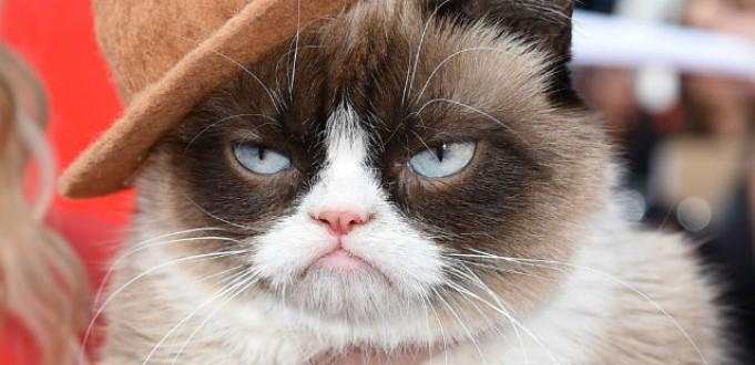 Grumpy Cat fatura mais de R$ 200 milhões em dois anos de sucesso