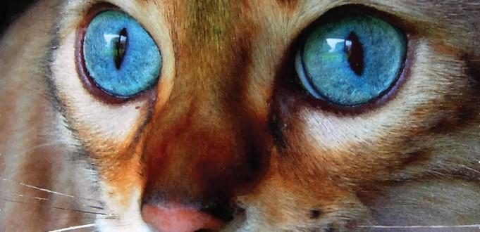 Úlcera de córnea em cães e gatos