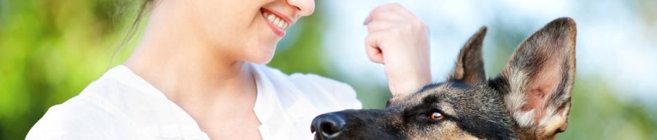 Creche para Cães - Praticidade para os donos de pets
