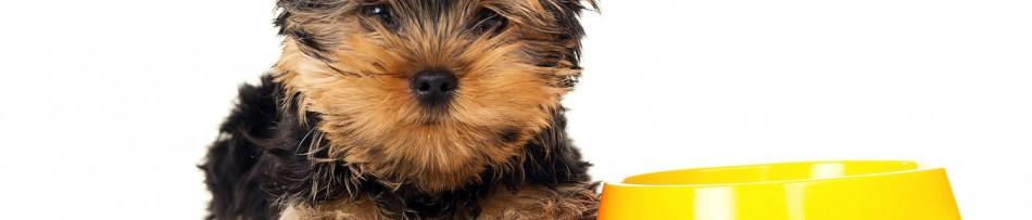 Alimentação de Filhotes de Cachorro - Opções de Comidas