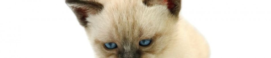 Petiscos para Felinos