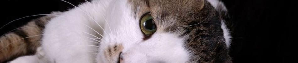 Depressão Felina - Como identificar e tratar