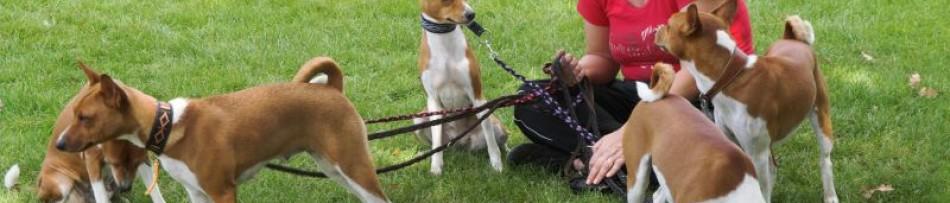 Dog Walker - O Acompanhante de Caminhada para Cães